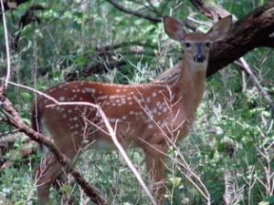 deer314